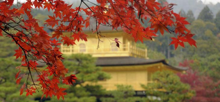 I colori della natura: alla scoperta del Giappone